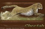 """Cheetah 2"""" X 3"""" Magnet"""