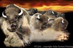 Prairie Thunder Bison 2