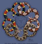 Snake Knot Adult T-shirt