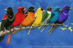 "Songbird Spectrum 2"" X 3"" Magnet"