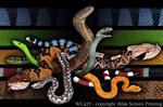 Venomous Snakes 2
