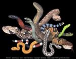 Venomous Snakes Adult T-shirt