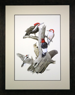 Woodpecked Framed Print