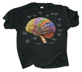 Brain Adult T-shirt - Front