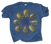 Turtle Circle Adult T-shirt - Front