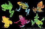 Frog Glow 2