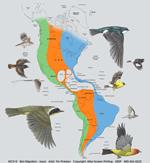 Bird Migration Adult T-shirt - Back