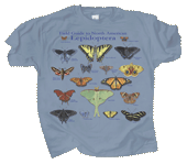 Lepidoptera Adult T-shirt - Front
