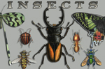 "Insects Etc 2"" X 3"" Magnet"