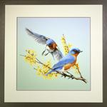 Bluebird Landing Framed Print