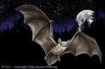 """Moon Bat 2"""" X 3"""" Magnet"""