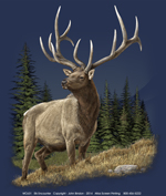 Elk Encounter Adult T-shirt test8