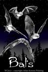 Discharge Bats 2