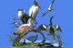 Florida Birds 2