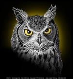 Discharge Owl 2/C Adult T-shirt