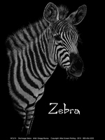 Discharge Zebra Adult Comfort Colors T-shirt