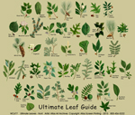 Ultimate Leaf Guide Adult T-shirt
