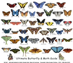 Ultimate Butterfly Guide Canvas Tote