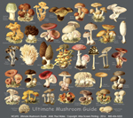 Ultimate Mushroom Guide Adult T-shirt