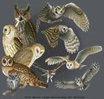 Night Owls Adult T-shirt test8
