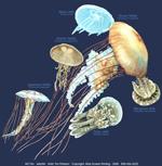 Jellyfish Glow Adult T-shirt test8