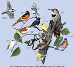 Eastern Birds Adult T-shirt