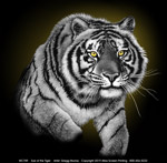 Eye of the Tiger Adult T-shirt
