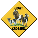 Goat Crossing - Front