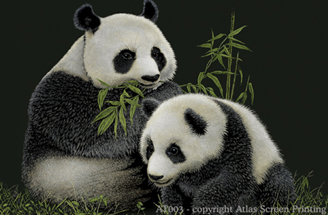 "Giant Pandas 2"" X 3"" Magnet"
