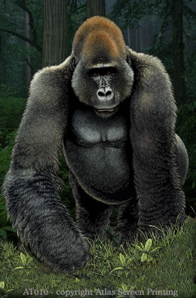 "Silverback Gorilla 2"" X3"" Magnet"
