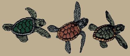 Sea Turtle Trio Embroidered Bucket Cap (LG-XL)