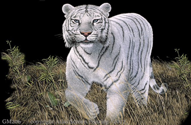 "White Tiger 2"" X 3"" Magnet"