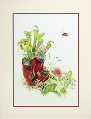 Carnivorous Plants Matted Print