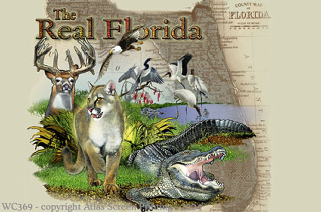 "Florida Collage 2"" X 3"" Magnet"