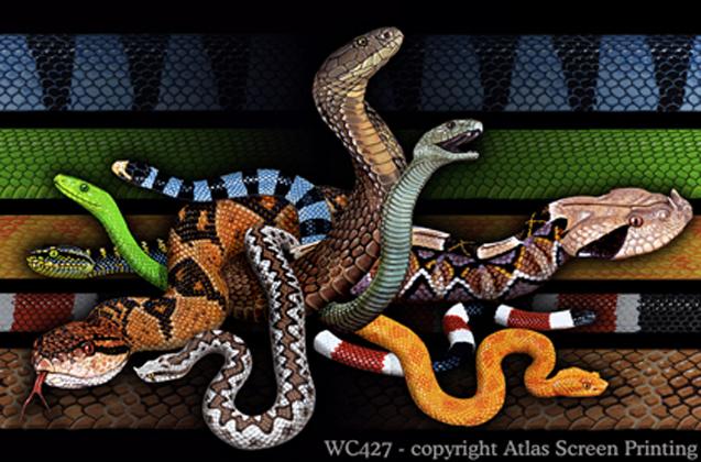 """Venomous Snakes 2"""" X 3"""" Magnet"""