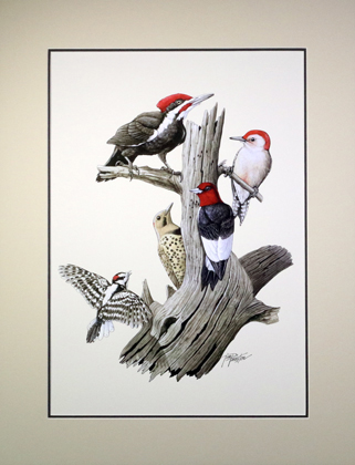 Woodpeckers Matted Print