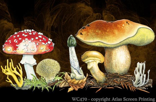"""Mushrooms 2"""" X 3"""" Magnet"""