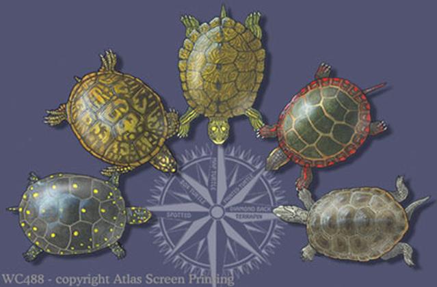 """Turtle Circle 2"""" X 3"""" Magnet"""