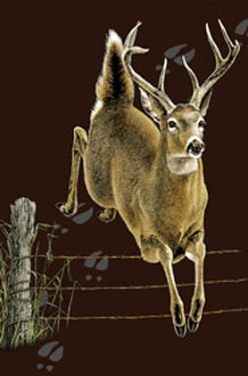 "Deer Trax 2"" X 3"" Magnet"