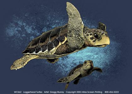 Loggerhead Turtles Adult T-shirt