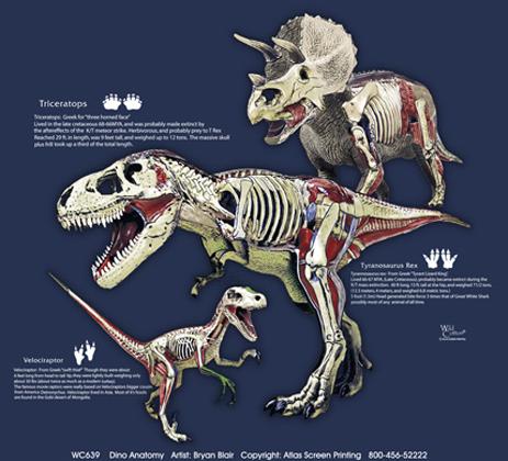 Dino Anatomy Adult T-shirt