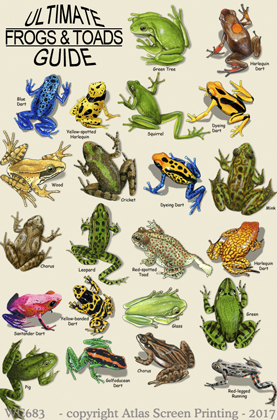 """Ultimate Frog Guide 2"""" X 3"""" Magnet"""