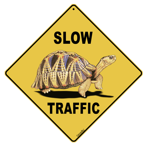 Slow Traffic (Tortoise) Crossing
