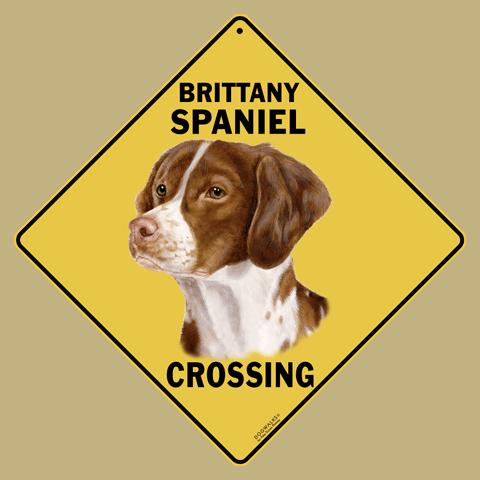 Brittany Spaniel Crossing