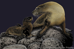 "California Sea Lions 2"" X 3"" Magnet"