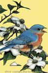 """Bluebird 2"""" X3"""" Magnet"""