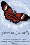 "Postman Butterfly 2"" X 3"" Magnet"