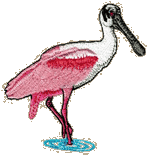Roseate Spoonbill Embroidered Cap