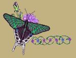 Urania Moth Embroidered Cap