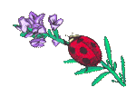 Ladybug Embroidered Cap